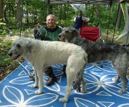 ...and two wolfhounds.